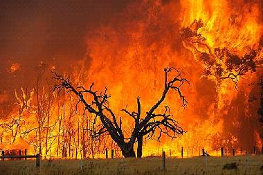 Black-Saturday-Bushfires