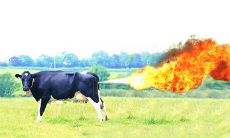 The domesticated cow is going to fart itself to oblivion if it's not careful.