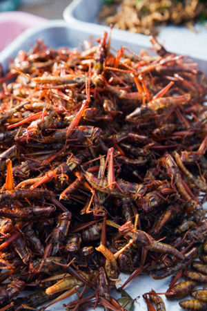Deep fried grasshoppers. Well, er. OK. If I must.
