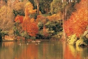 Autumn colours in the Dandenong Ranges, Vic
