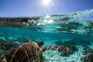 Turtle, Queensland