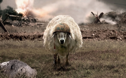 war sheep