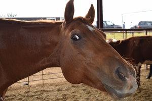 surprised_horse