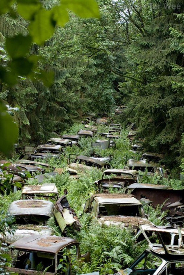 Car graveyard, Chatillon, Belgium